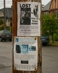 Lost Cat Posters
