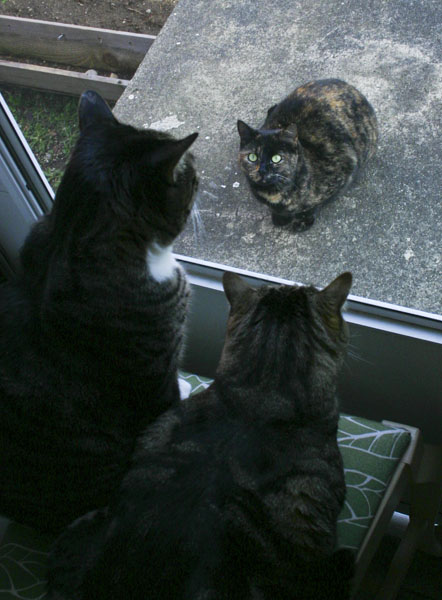 Brother Henry and Otis sit on a chair looking out through a screen door at Cookie, a dark calico cat.