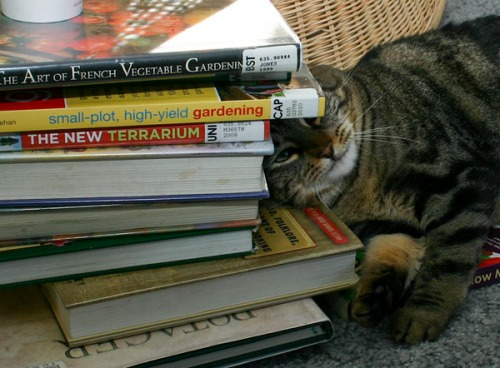 Otis lying with his hear pressed up against a stack of gardening books.