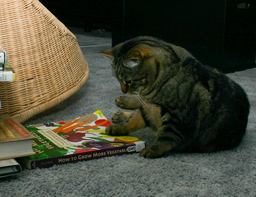 Otis sits with one paw on a gardening book, looking as if he is reading the cover.