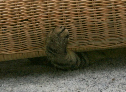 The front, bottom edge of a wicker chair with one cat paw sticking out from under it.