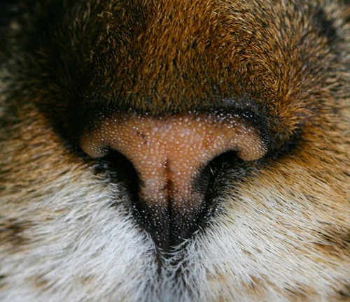 A close-up of Otis's nose.
