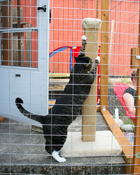Brother Henry attacking a scratching post.