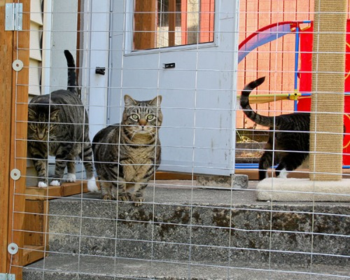 Brother Oliver, Leader Otis and Brother Henry explore their new Outdoor Domain.