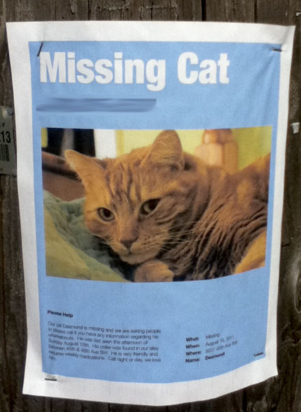 A poster for a missing cat named Desmond.
