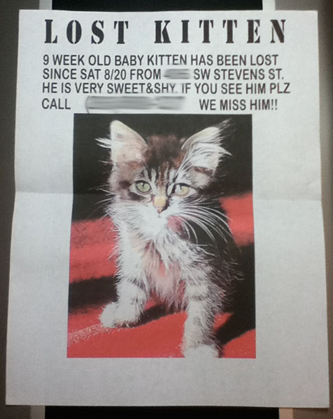 chessie lily luther and a kitten are missing one kitten is found