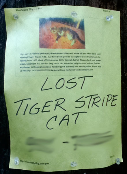 A lost cat poster for Lily.