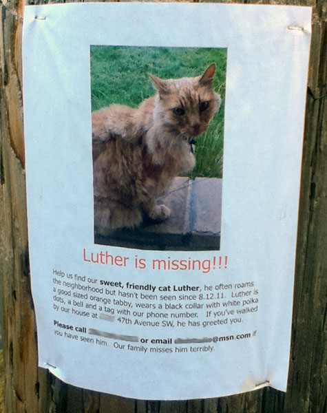 Lost cat poster for Luther.