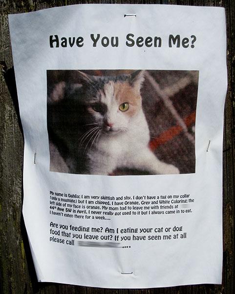 """Vermisste Katze - """"Have you seen me?"""" Anzeige auf Papier"""