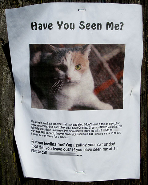 Missing Cat Flyer  Make A Missing Poster