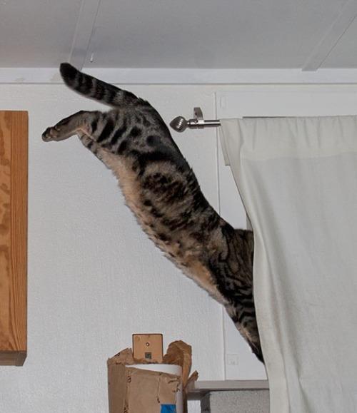Otis jumping down to shelf.