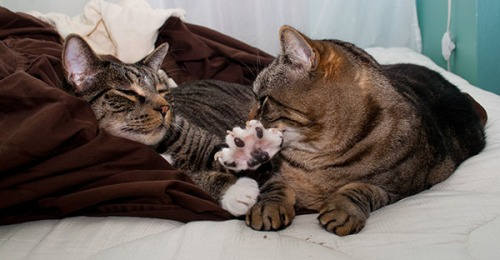 Henry laying on warm sheets and pushing Otis away.