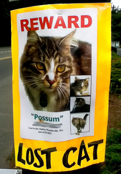 Lost cat poster for a cat named Possum.