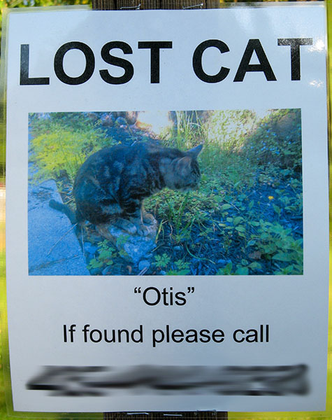 A lost cat poster for a cat named Otis.