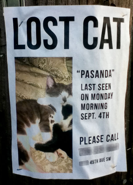 Lost Cat Poster for Pasanda