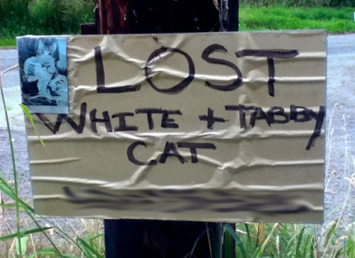 Lost cat poster for a white and tabby cat.