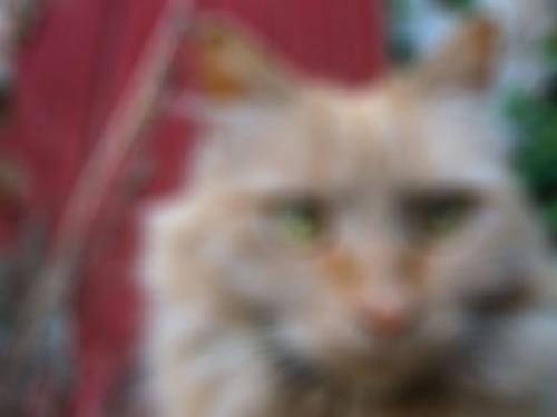 A blurry closeup of Mama Cat.