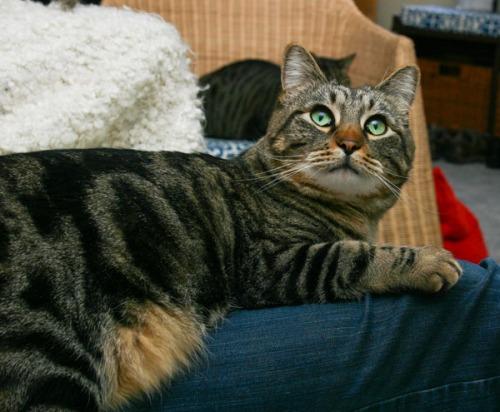 Otis sitting on the leg of a Guardian looking upset.