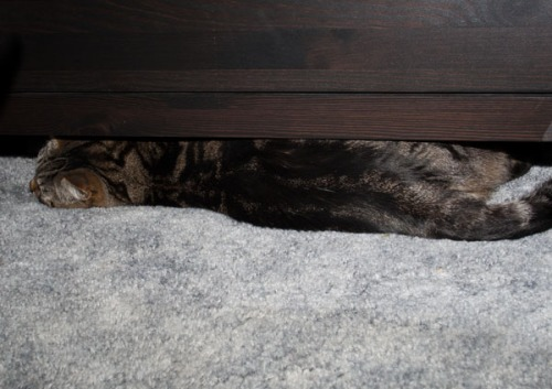 Otis wedged under a chest of drawers.