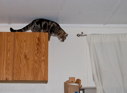 Otis preparing to jump down.