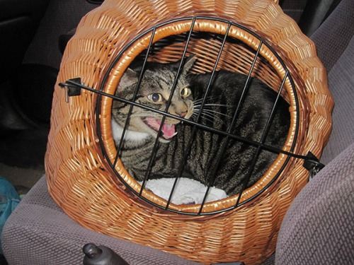 Brother Henry in a cat carrier in a car.