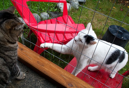 Domino reaching through the wire with one paw while Otis looks at him.