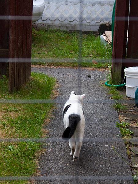 Domino walking away.