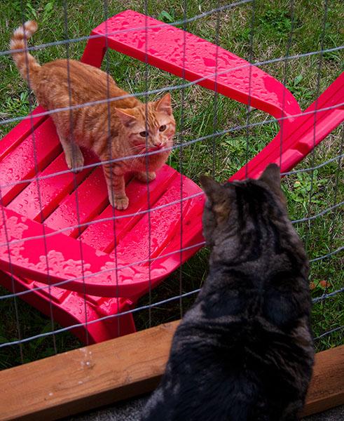 An orange tabby looks at Otis.