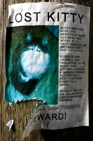 A poster for a lost cat named Buddy.