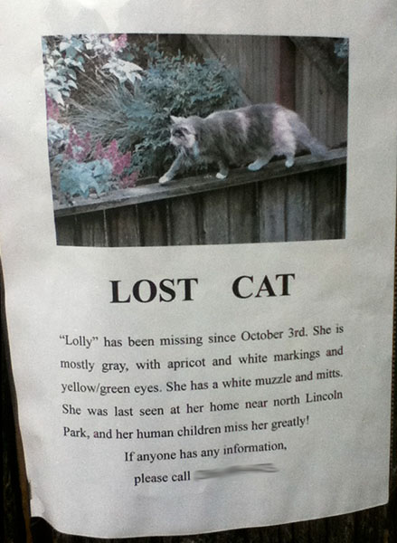 A lost cat poster for Lolly
