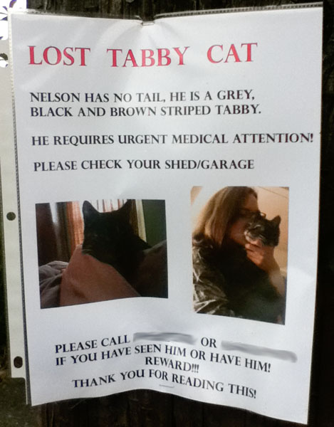 Lost Cat Poster for Nelson