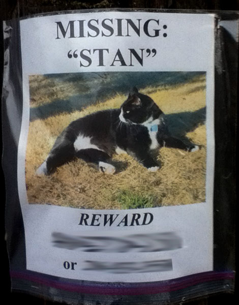 A lost cat poster for Stan
