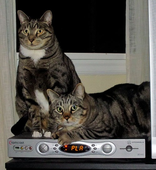Brother Oliver and Otis sitting on top of a cable box.