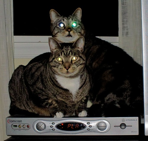 Otis and Brother Oliver on top of the cable box with glowing eyes.