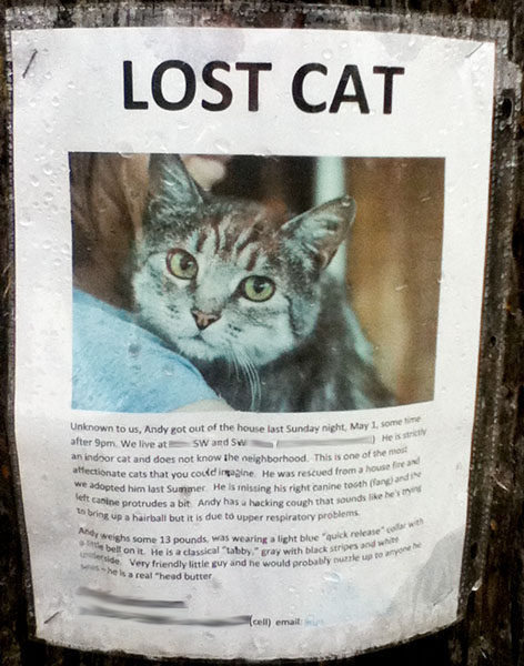 A poster for a lost cat named Andy.
