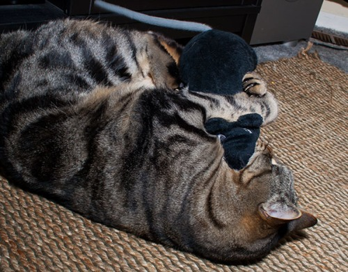 A stuffed rat appears to be going for Otis's throat.