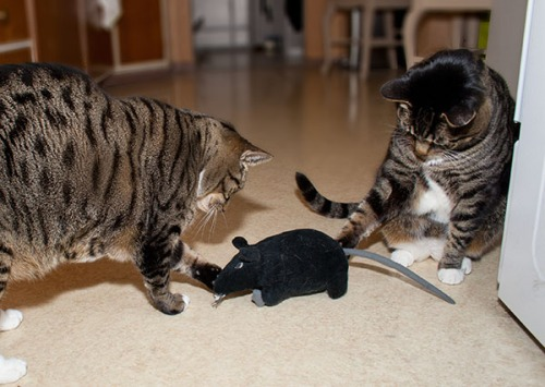 Brothers Henry and Oliver fight the rat.