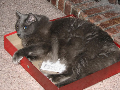 Max in Scrabble box