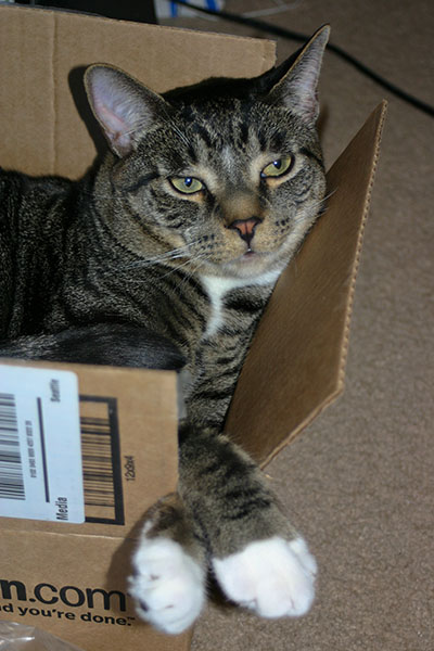Brother Henry in a box