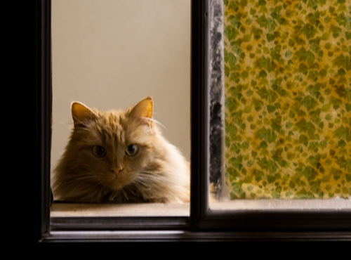 Mama Cat looking out through an open window.