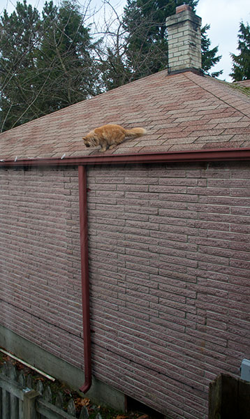 Mama Cat looking down from roof as if she's going to jump.
