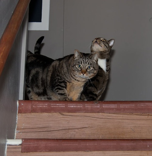 Otis and Oliver at top of stairs.