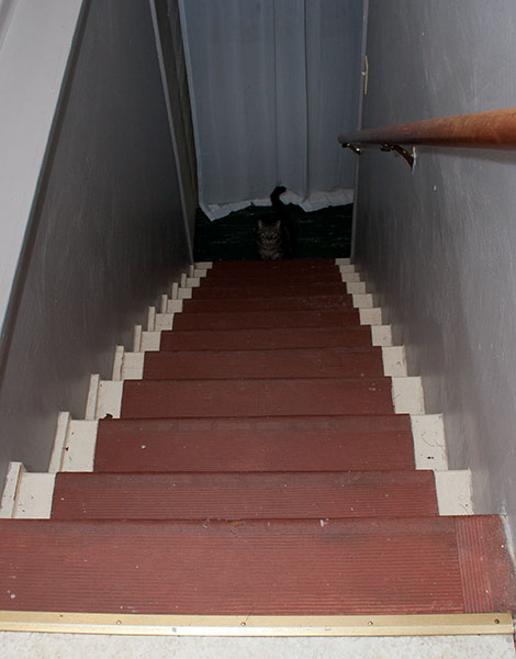 Otis at bottom of stairs