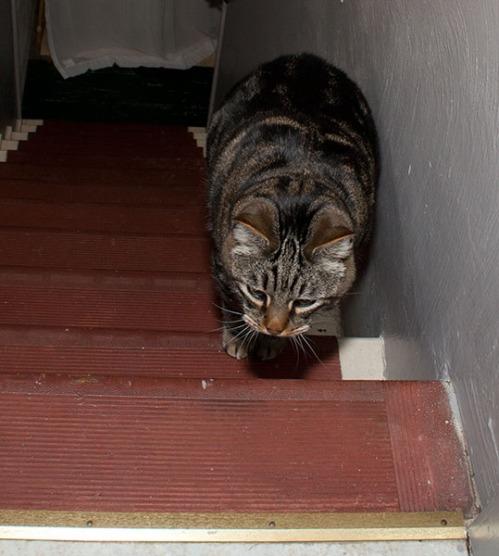 Otis climbing stairs.