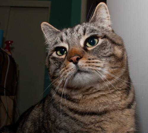 Otis looking annoyed.