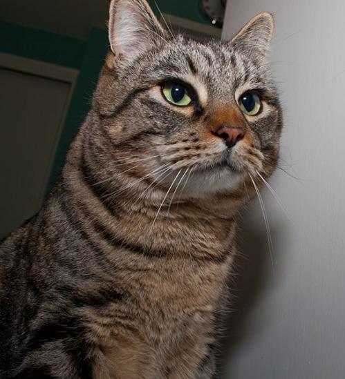 Otis looking quizzical.