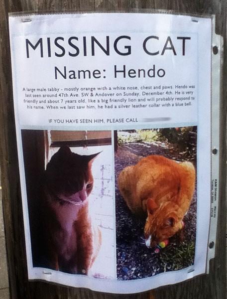 Lost Cat- Hendo