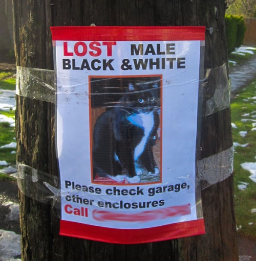 A lost cat poster for a black and white male.