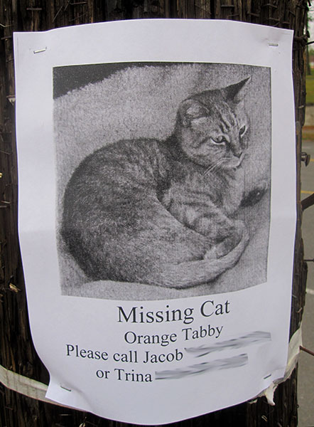 Lost Cat Poster- Orange Tabby