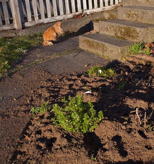 Mama cat sitting on sidewalk.